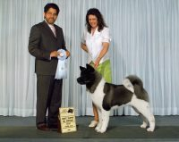 Best Puppy in Group ~ Ch. SheBogi's Blown Away  Akita