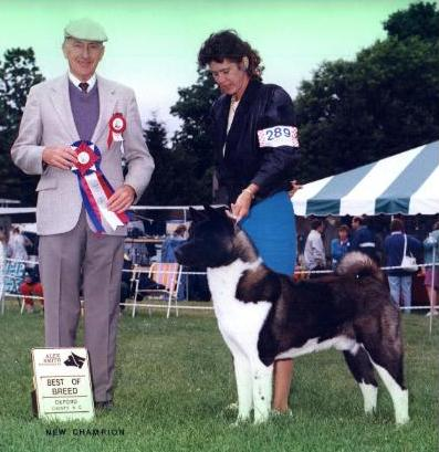 Winning Best of Breed over Specials!  Ch. SheBogi's Max A  Mill-Yen