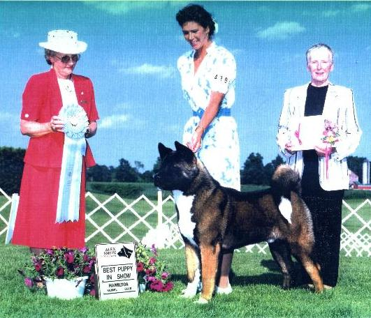 Best Puppy In Show ~Ch. SheBogi's Roll Of The Dice  *Nevada*