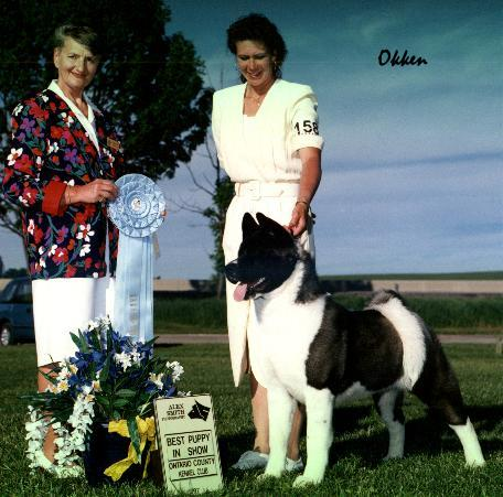 His First of 4 Best Puppy In Show!  BISS Ch. SheBogi's Mirror Of The Law  *Okken*