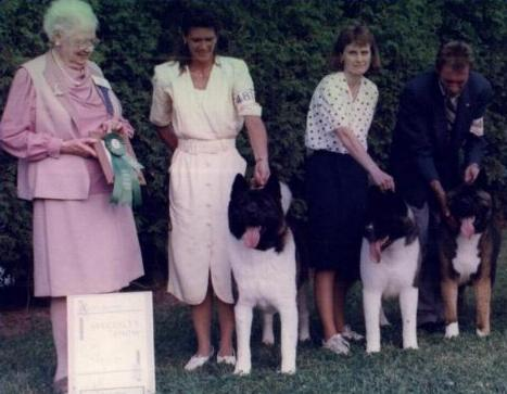 1999 Specialty ~ Best Stud Dog ~Am/Can Ch. SheBogi's Above The Law *BISS Ch. SheBogi's Mirror Of The Law * Ch. SheBogi's Roll Of The Dice